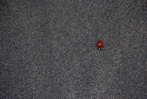 ladybug on the beach