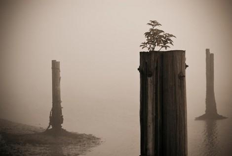 Budd Bay fog