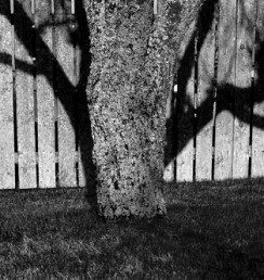 tree shadow & fence