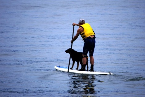 Dog on Paddle Board