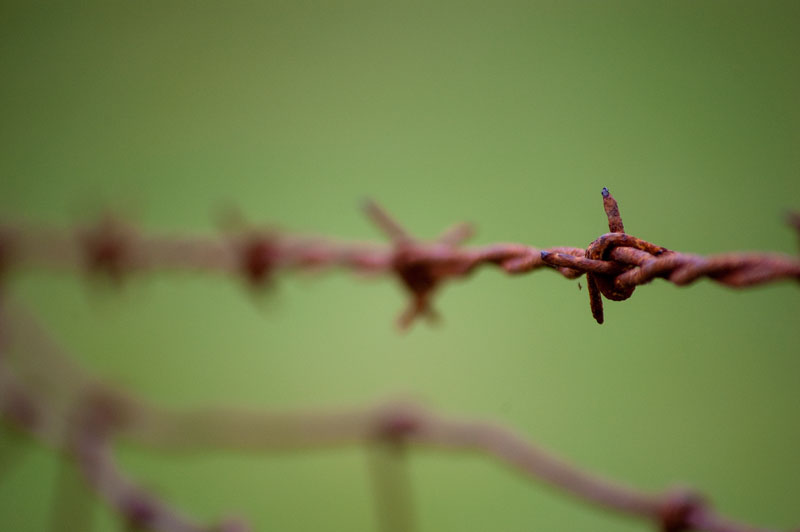 Barbwire Fence Detail