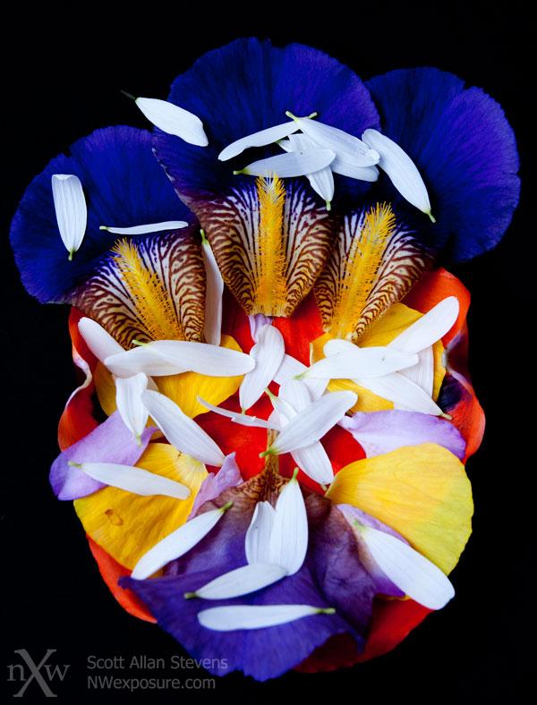 garden flower petals