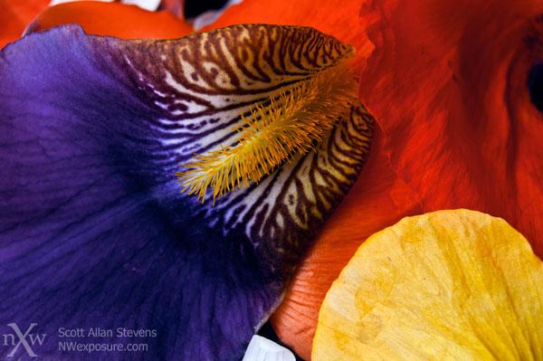 Garden Petals Detail - ©2011 Scott Allan Stevens