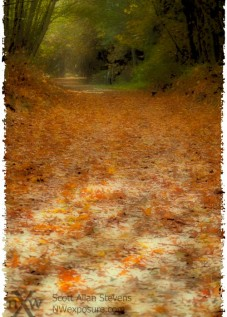 autumn-leaves2011