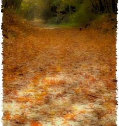 autumn-leaves2011