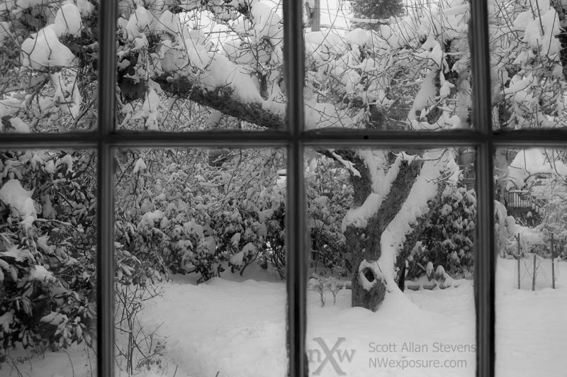 Apple Tree Under Blanket of Snow