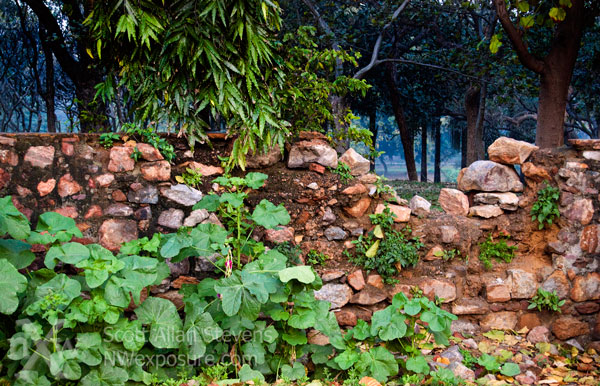 crumbling Stone wall in Delhi park