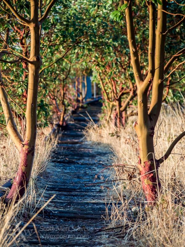 Abandoned train tracks and madrona trees