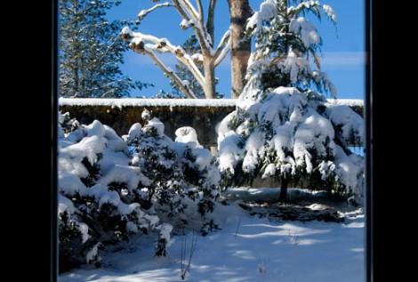 Last Window of Winter