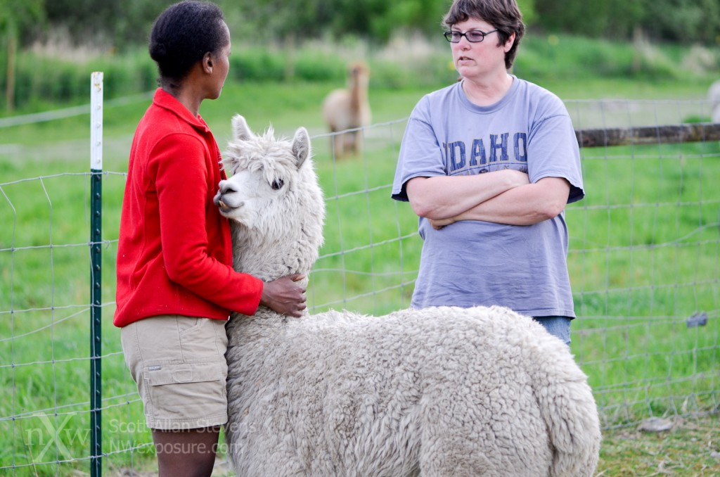 Cross Creek Alpaca Rescue