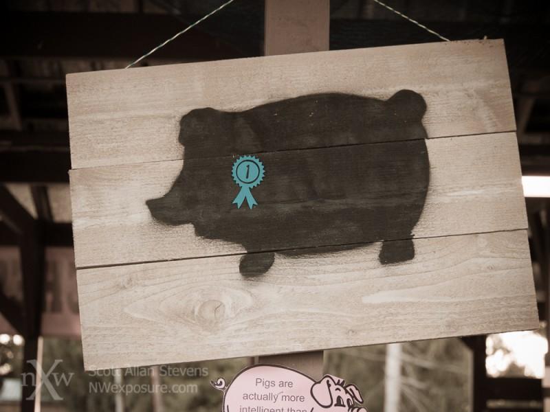 Pig sign at Thurston County Fair