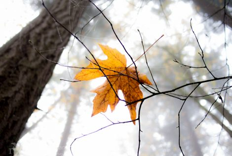 Autumn in Cascadia